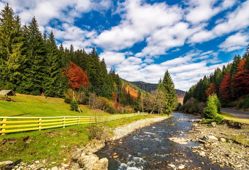云杉的树木丛生的山的小河 免版税库存图片