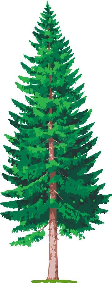 云杉的结构树 向量例证