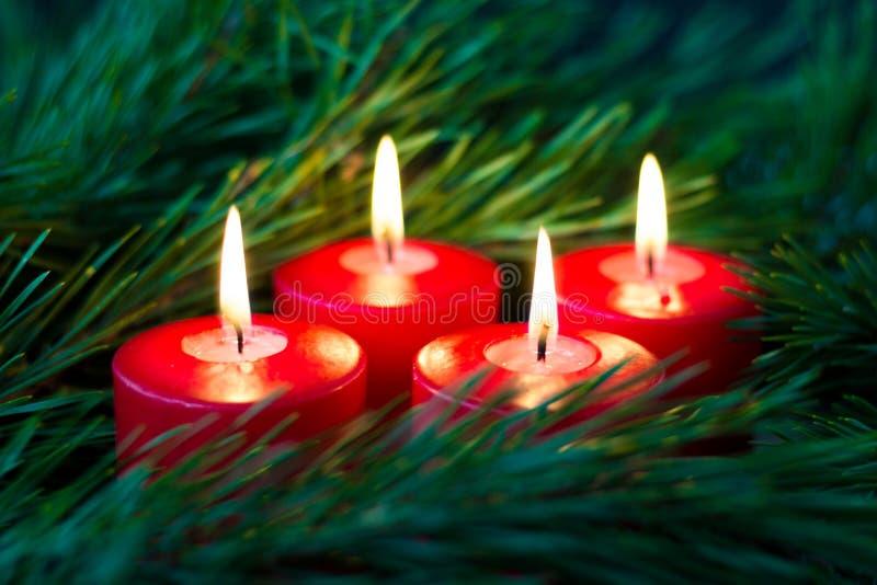 云杉绿色分支围拢的四个灼烧的红色出现蜡烛  免版税库存照片