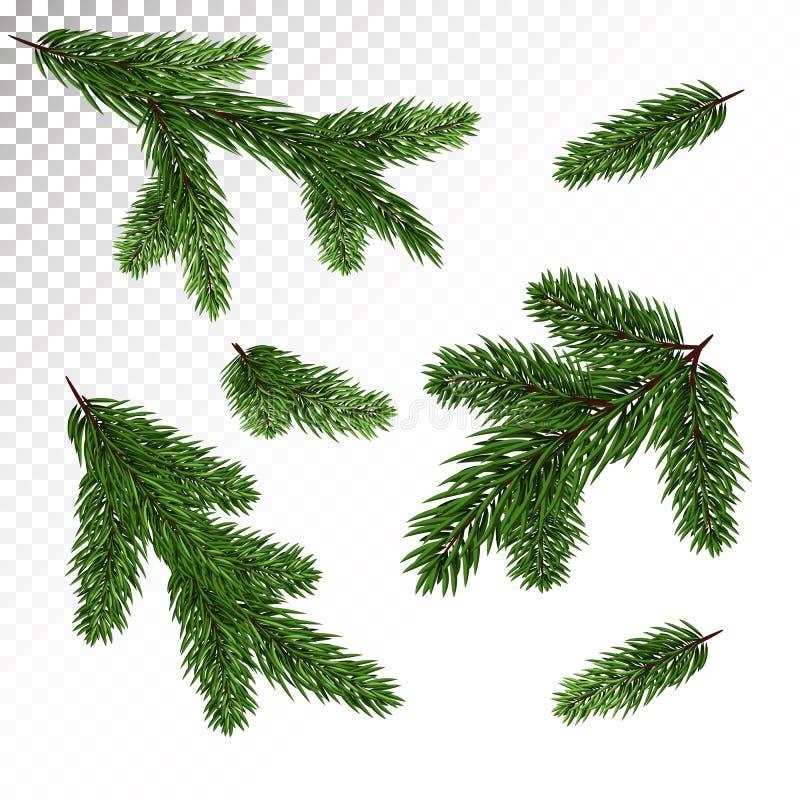云杉/杉木的汇集在一个现实样式分支 新的Y 库存例证