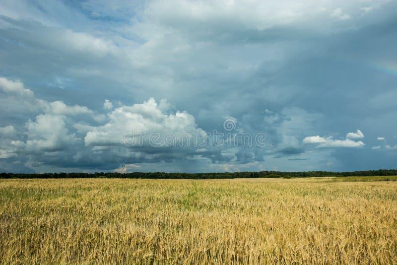五谷、天际和黑暗的暴风云的领域在天空 免版税图库摄影