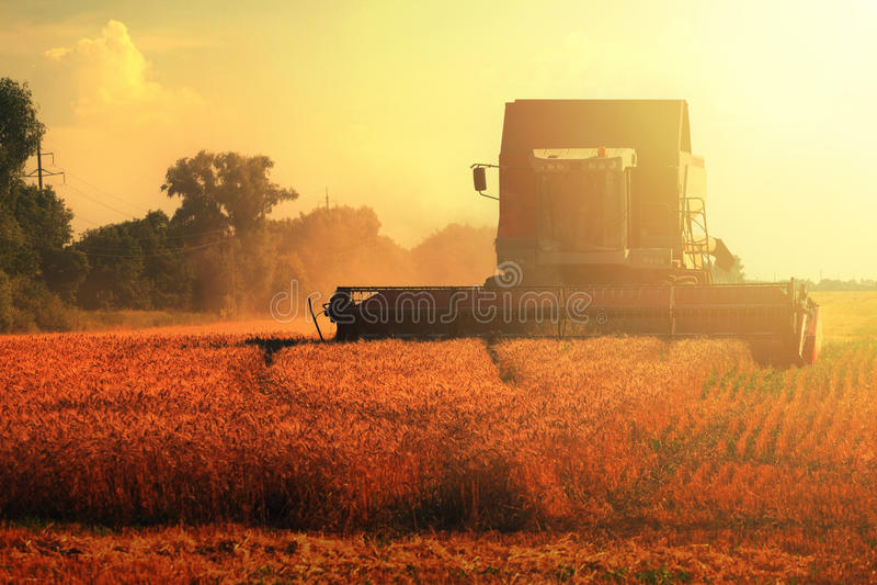 五谷在麦田的收割机组合 免版税图库摄影