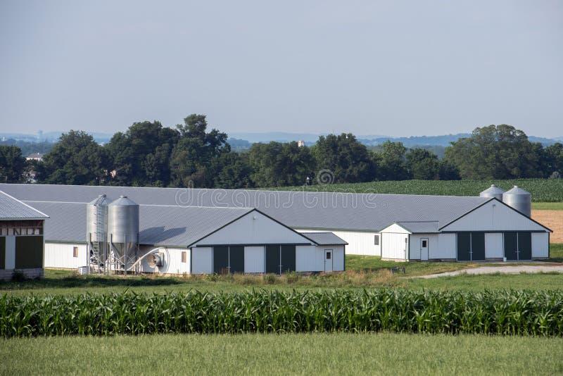 五谷金属筒仓在兰卡斯特宾夕法尼亚安曼人国家 免版税库存图片