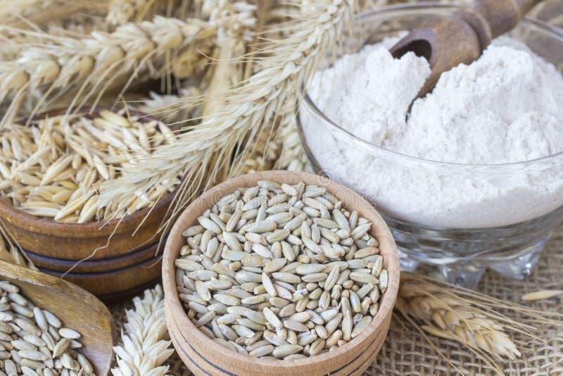 五谷:麦子和燕麦,麦子的耳朵五谷在麻袋布的 在一个玻璃杯子的面粉 库存照片