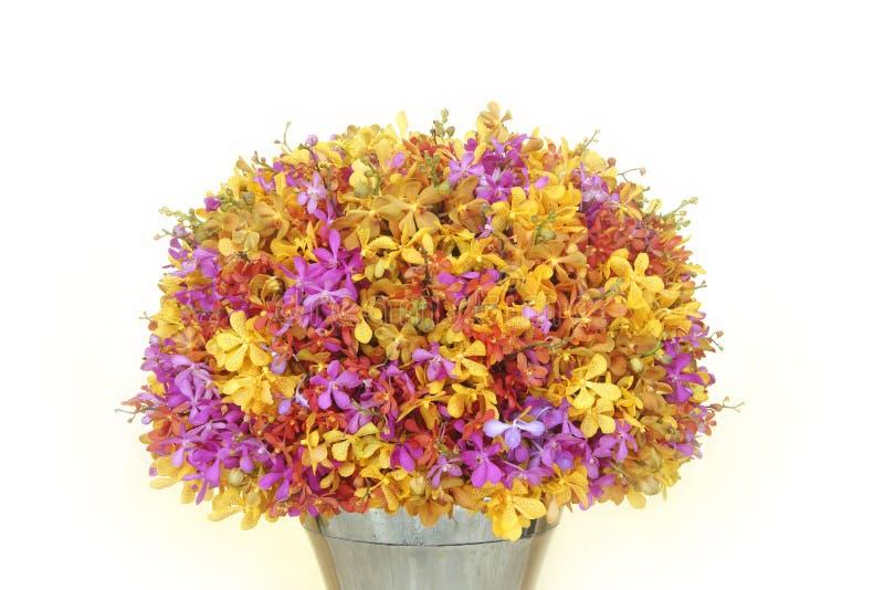 五颜六色兰花花的花束,白色背景 库存图片