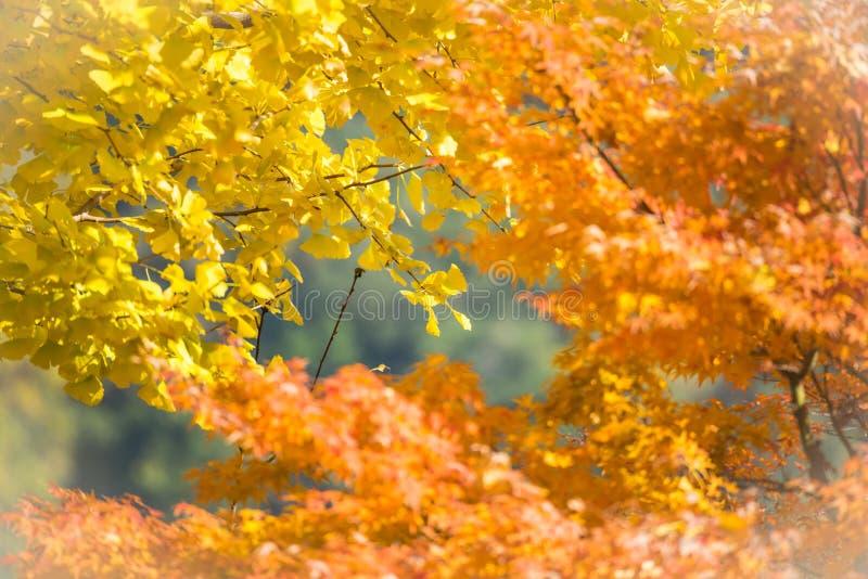 五颜六色叶子在秋天 免版税库存照片
