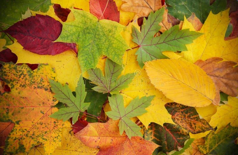五颜六色和明亮的背景由下落的秋叶做成 免版税图库摄影