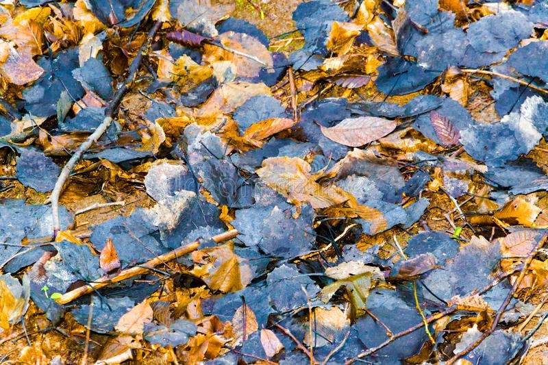 五颜六色和黑暗的秋叶隔绝了背景 免版税库存照片
