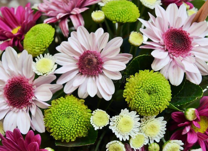 五颜六色和beauyful花 库存图片