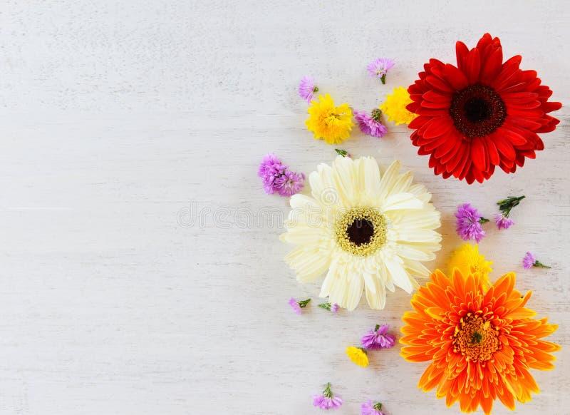 五颜六色新鲜的春天花的大丁草和花各种各样在白色木 库存图片