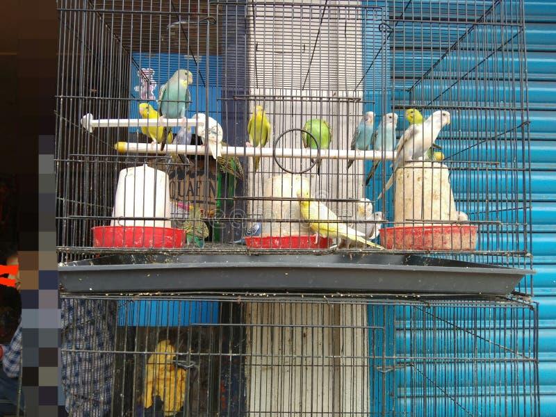 五颜六色爱的鸟甜和 免版税图库摄影