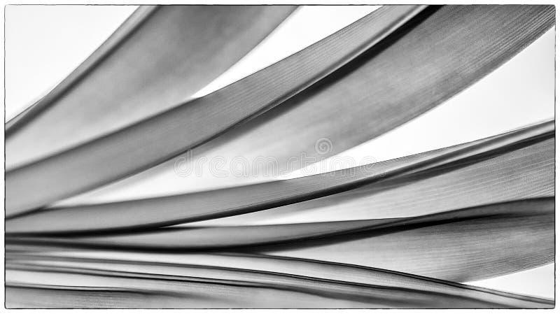 五颜六色的光和抽象形式叶子 免版税图库摄影