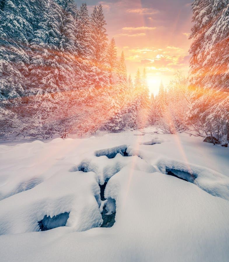 五颜六色的冬天日出在山森林里用黑暗的水r 库存照片