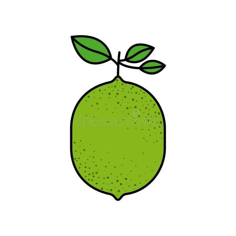 五颜六色的剪影用与词根和叶子的柠檬果子 库存例证