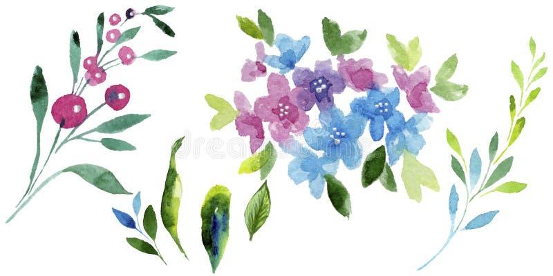 五颜六色的勿忘我草 花卉植物的花 被隔绝的野生春天叶子野花 皇族释放例证