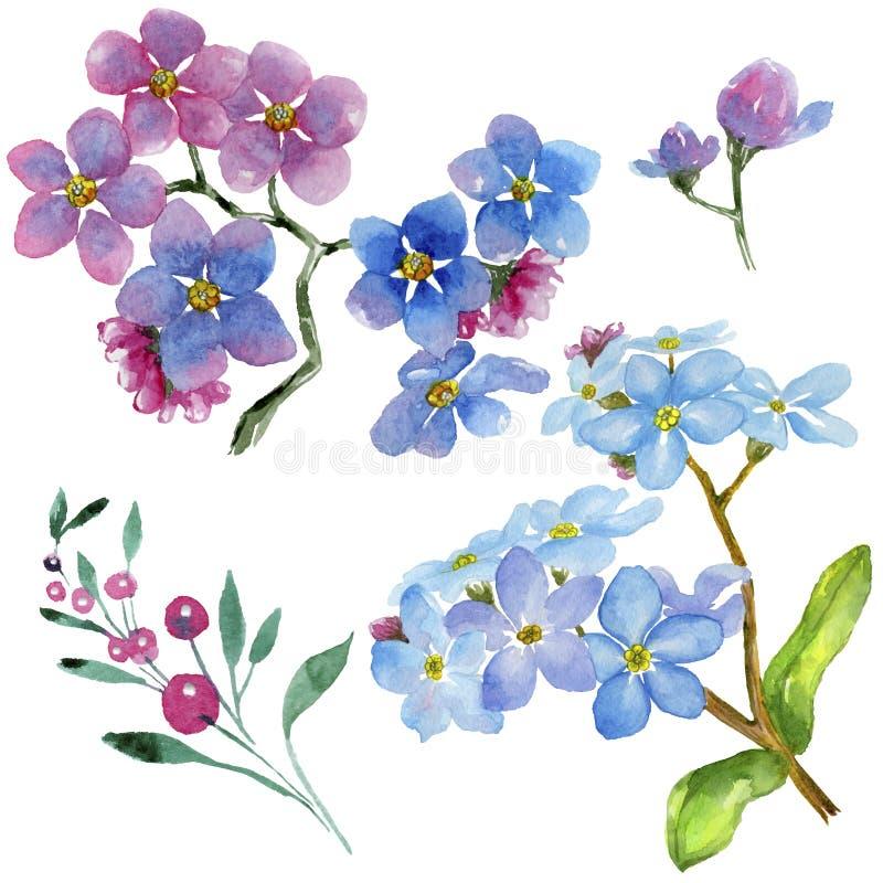 五颜六色的勿忘我草 花卉植物的花 被隔绝的野生春天叶子野花 向量例证