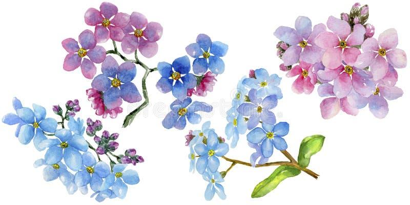 五颜六色的勿忘我草 花卉植物的花 被隔绝的野生春天叶子野花 库存例证