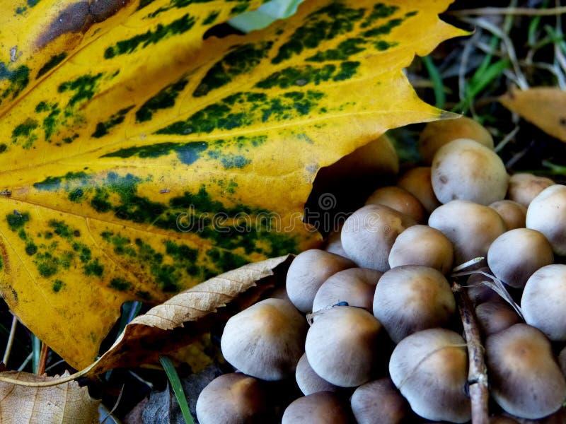 五颜六色的叶子和蘑菇 库存照片