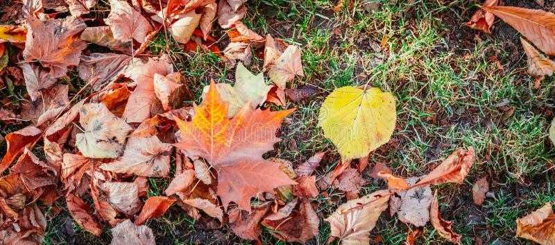 五颜六色的叶子在公园,背景,秋天 免版税库存照片