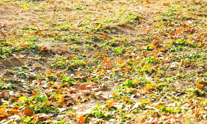 五颜六色的叶子在地面上的秋天 图库摄影