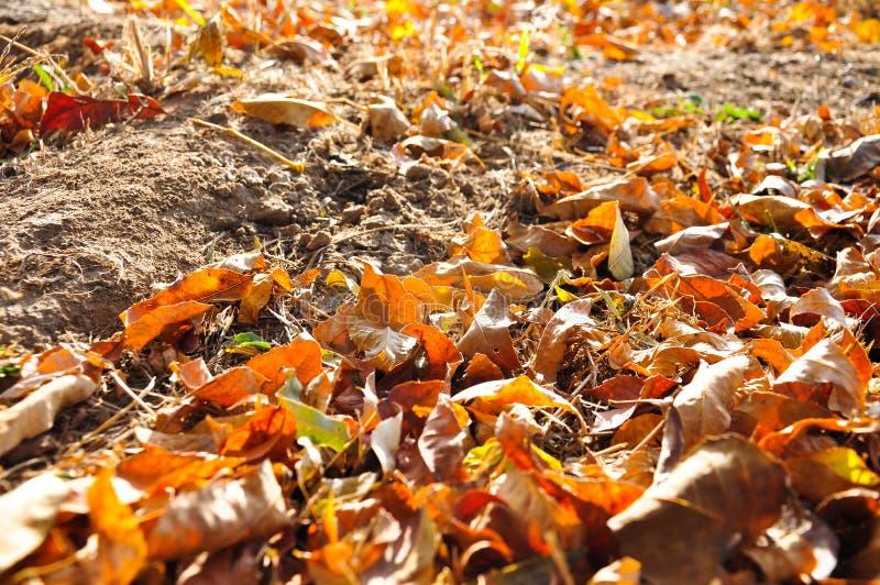 五颜六色的叶子在地面上的秋天 库存照片