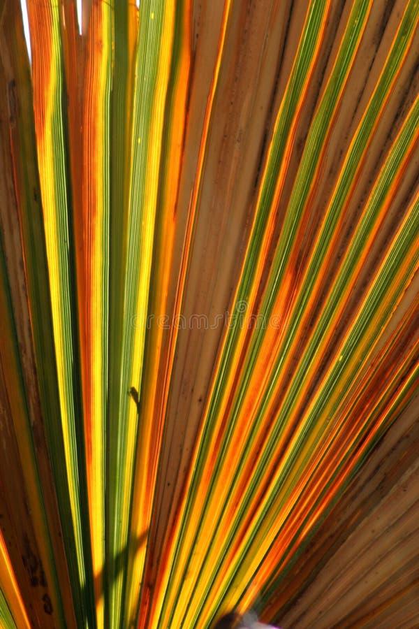 五颜六色的叶子掌上型计算机 免版税库存照片