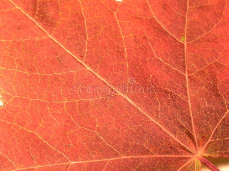 五颜六色的叶子纹理 库存图片