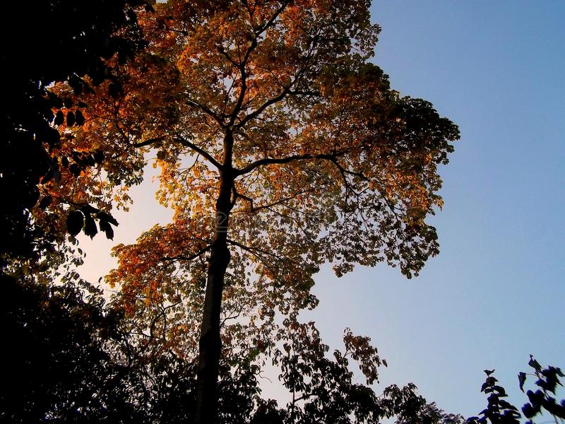 五颜六色的叶子结构树 免版税库存照片