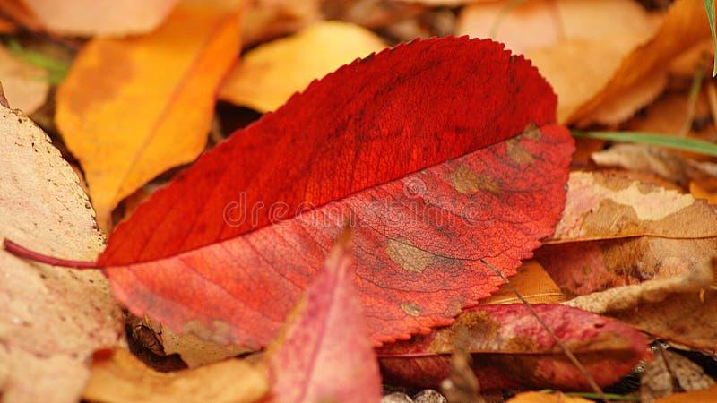 五颜六色的叶子 免版税库存图片