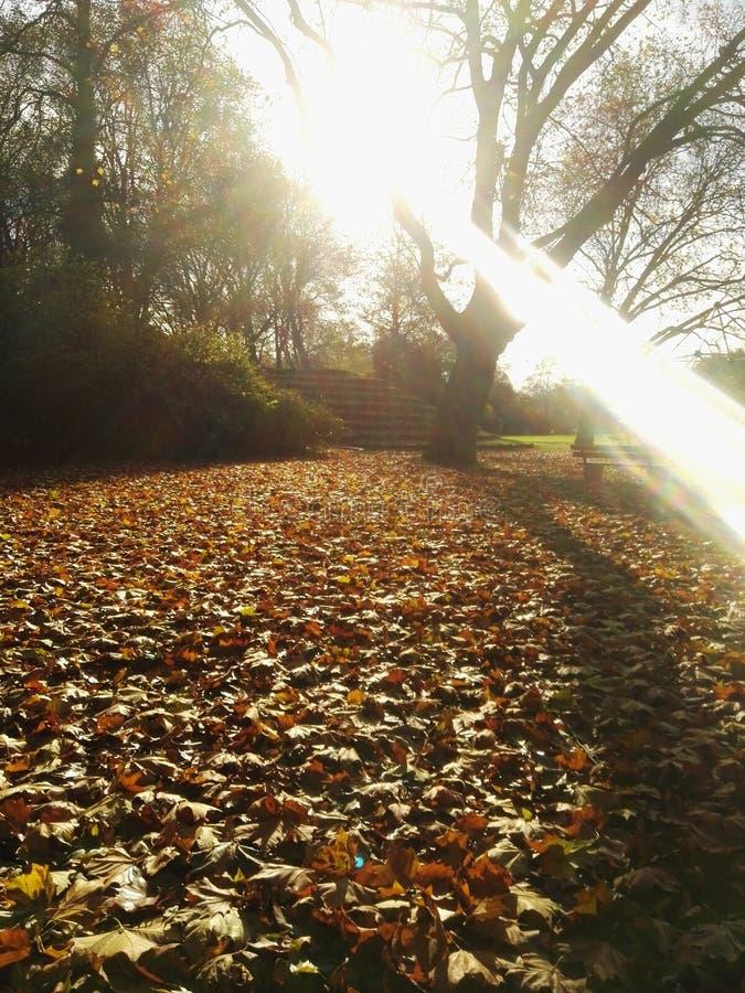 五颜六色的叶子 免版税图库摄影