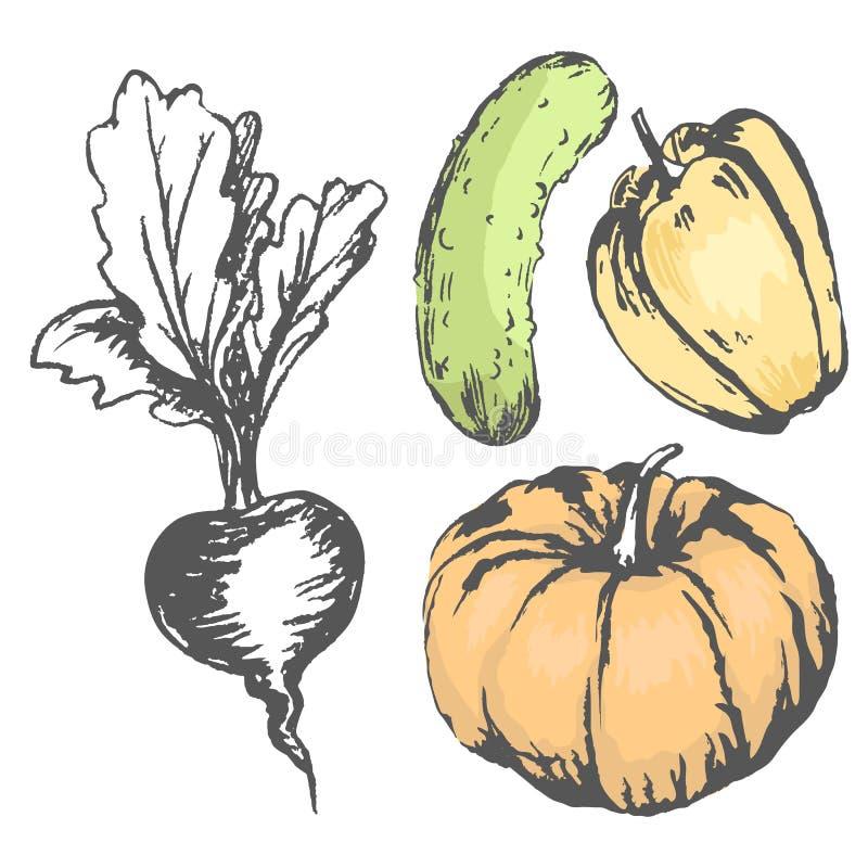 五颜六色的图表菜用无色的甜菜 库存例证