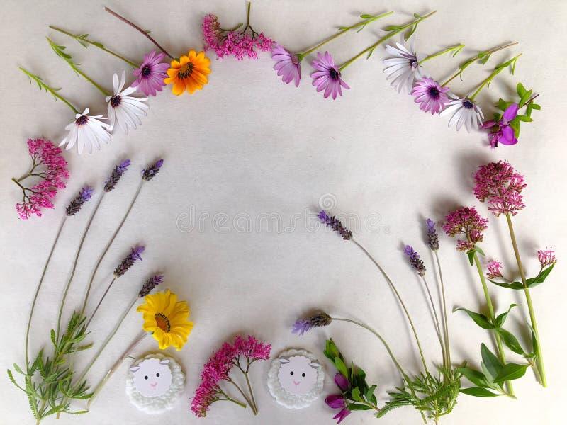五颜六色的在白色的春天花自然本底 库存图片