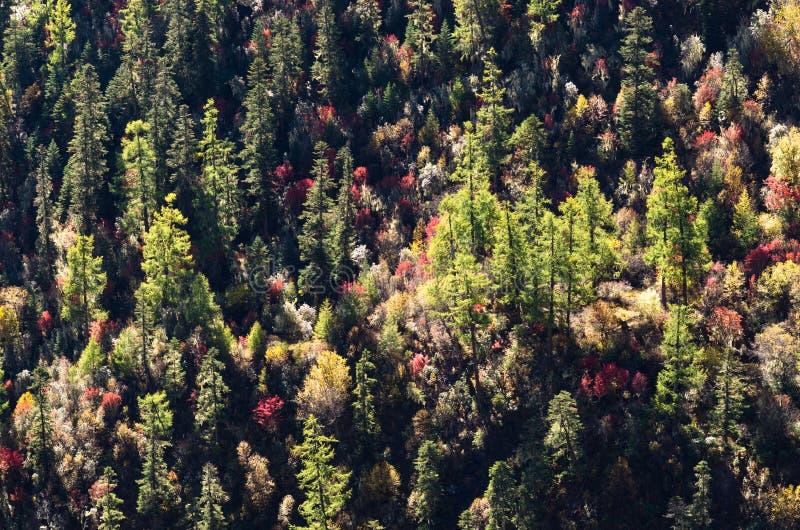 五颜六色的在Shangri la,中国的秋天高山纹理 库存图片