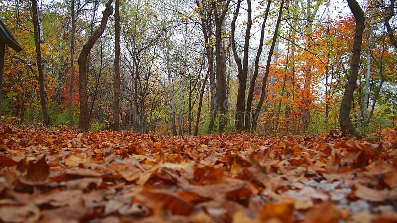 五颜六色的地毯在秋天森林 库存图片
