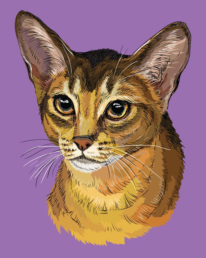 五颜六色的埃塞俄比亚猫 库存例证