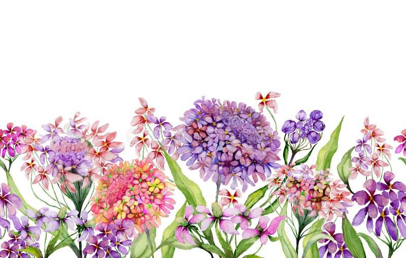 五颜六色的夏天宽横幅 美丽的生动的屈曲花属植物开花与在白色背景的绿色叶子 水平的模板 库存例证