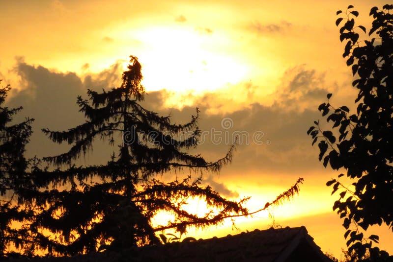 五颜六色的夏天日落 黄色天空和黑暗的树 免版税库存照片