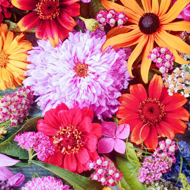 五颜六色的夏天花背景 免版税库存照片
