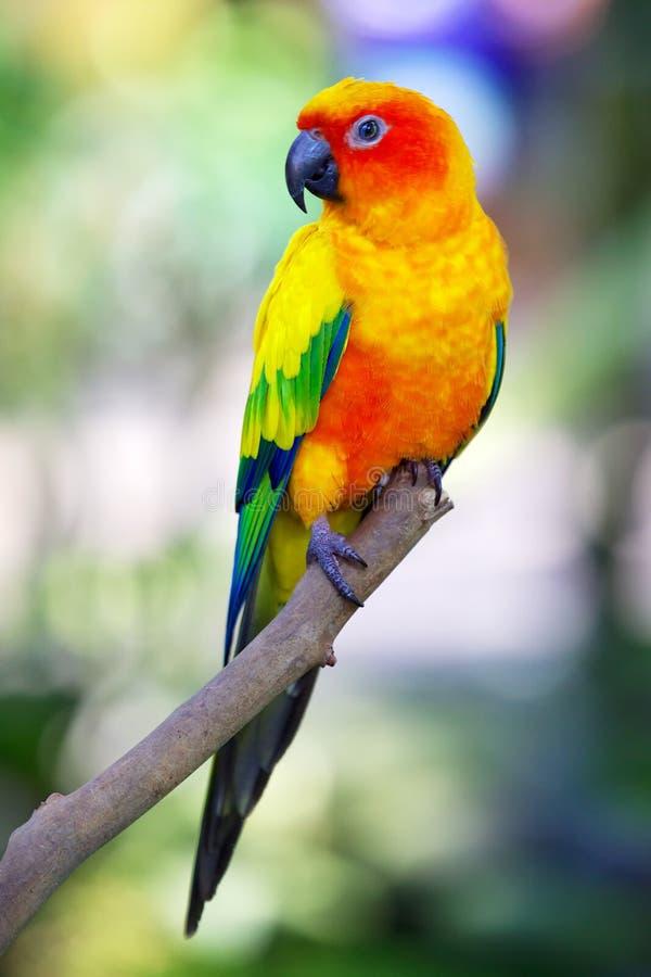五颜六色的太阳鸟坐分支 免版税库存照片