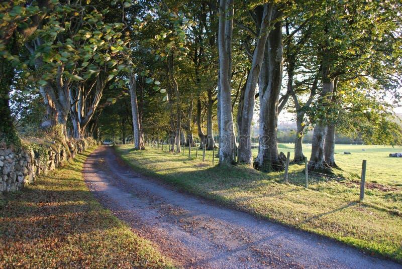 五颜六色的山毛榉树农厂车道方式 库存照片