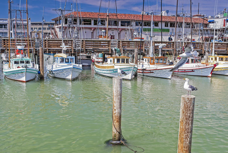 五颜六色的帆船线在圣Franci Fishermans码头的  库存图片