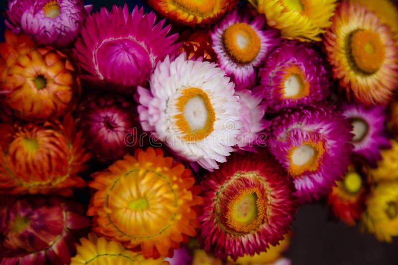 五颜六色的干花 库存图片