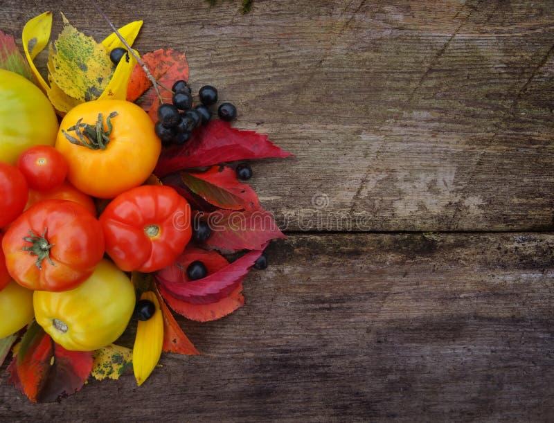 五颜六色的新近地被收获的蕃茄 秋天背景特写镜头上色常春藤叶子橙红 免版税库存照片