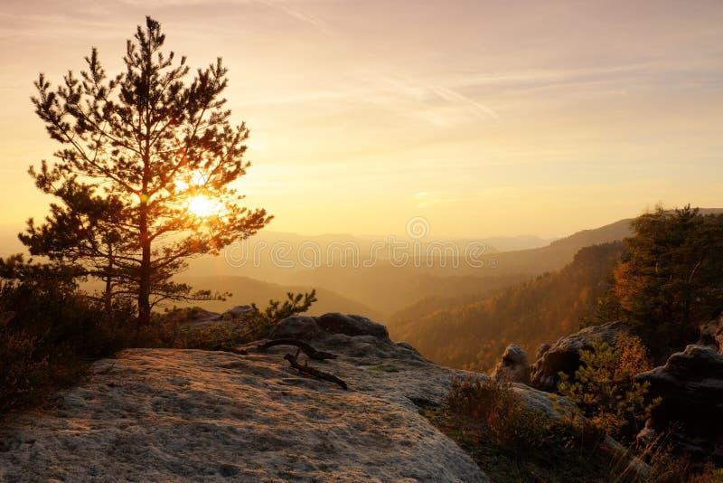 五颜六色的日落在一个美好的秋天岩石公园 在峰顶的弯曲的树在深谷上 橙色太阳光芒 免版税库存图片