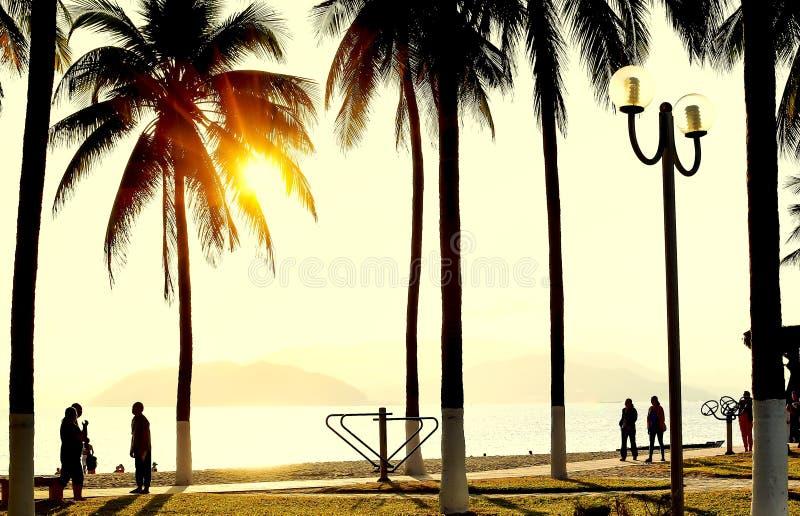 五颜六色的日落或日出风景与棕榈树剪影  免版税库存照片