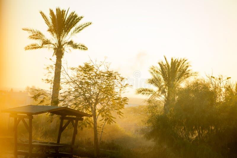 五颜六色的日落或日出风景与棕榈tr剪影  免版税库存图片