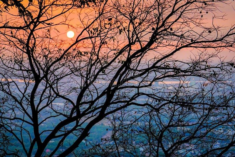 五颜六色的日落通过树 免版税库存图片