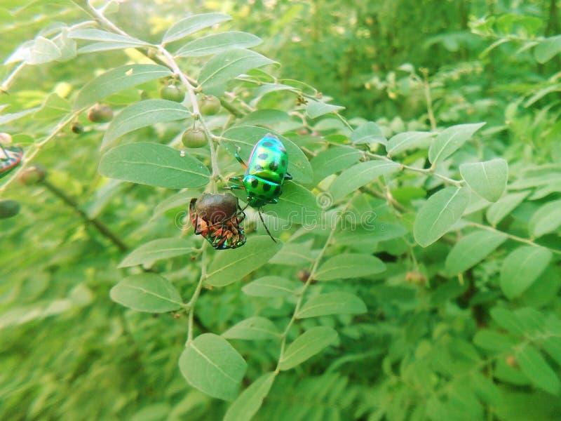 五颜六色的昆虫 库存图片