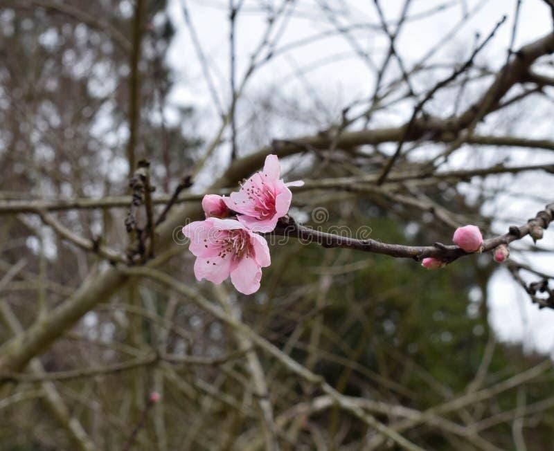 五颜六色的春天开始 图库摄影