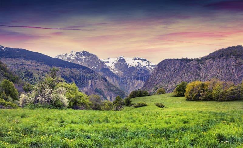 五颜六色的春天日落在开花高山草甸 免版税库存图片